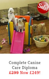 complete canine care slide