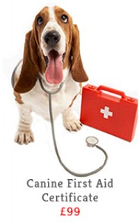 canine first aid course slide