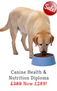 canine health nutrition diploma course