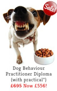 dog behaviour practitioner course slide