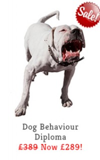 dog behaviour diploma course