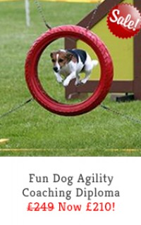 fun dog agility coaching course slide