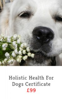 holistic health for dogs slide