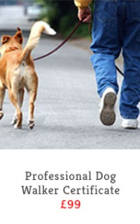 professional dog walker course slide
