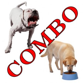 online dog behaviour courses