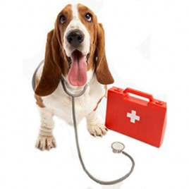 home study dog first aid course