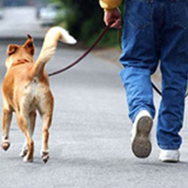 Professional Dog Walker Certificate Course