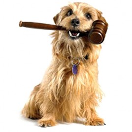 dog law online course