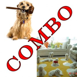 online dog sitter and online dog law certificate course combo