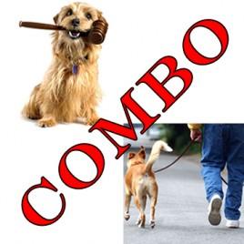 online dog courses. dog law and dog walker courses combo