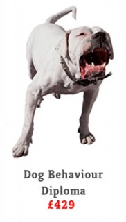 DogBhv Full
