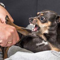 Dog behaviour diploma course image