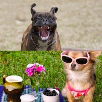 Advanced canine behaviour and Canine health and nutrition diploma combo image