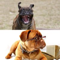 Advanced canine behaviour diploma and dog law certificate course image