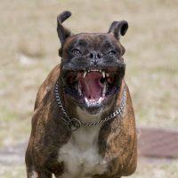 Advanced dog behaviour diploma course image