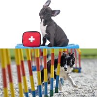 Canine first aid certificate and fun dog agility coaching diploma combo image
