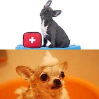 Canine first aid and holistic health for dogs certificates courses combo image