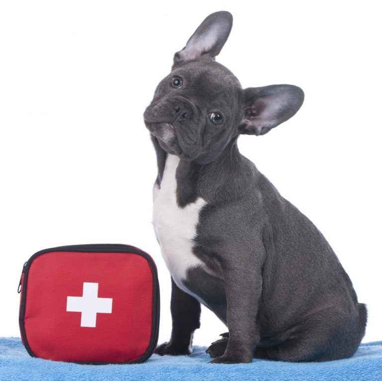 Canine first aid course