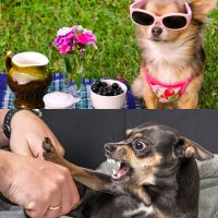 Canine health and nutrition and dog behaviour diplomas combo image