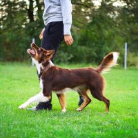 Competition obedience certificate course image