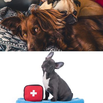 Complete canine care diploma and canine first aid certificate courses combo image