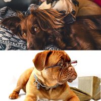 complete canine care diploma and dog law certificate courses combo image