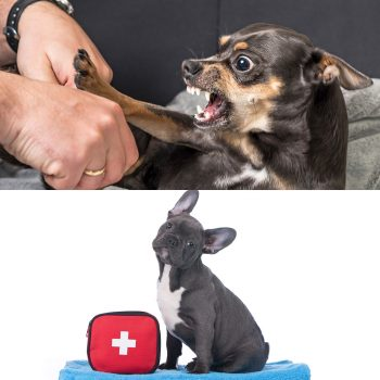 dog behaviour diploma and canine first aid certificate courses image