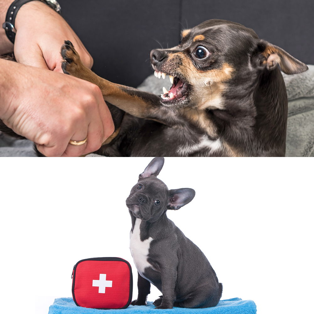 dog behaviour diploma and canine first aid certificate courses