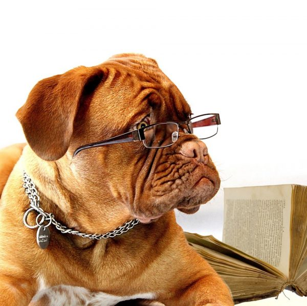 dog law course