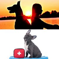 Professional dog sitter and canine first aid certificates combo image