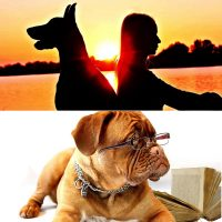 Professional dog sitter and dog law certificates combo image