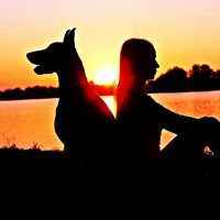 Professional dog sitter certificate course image