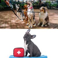 Professional dog walker and canine first aid certificates combo image