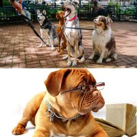 Professional dog walker and dog law certificates combo image