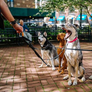 Professional dog walker certificate course image