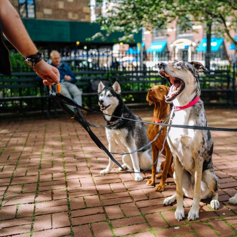 dog walker course