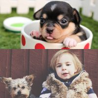 Puppy care certificate and dogs and children certificate combo image