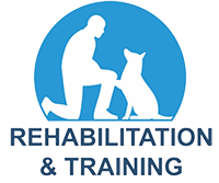 Rehabilitation and Training